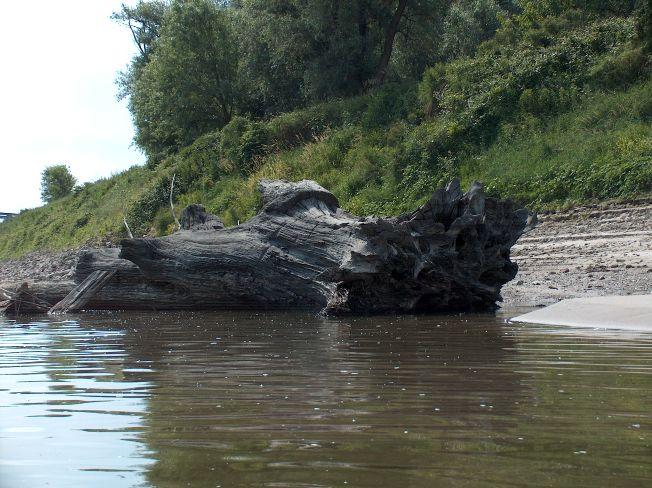 Fiume po secca del 2005 - Letto di un fiume in secca ...
